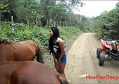 高清撒尿在丛林中的马旁边